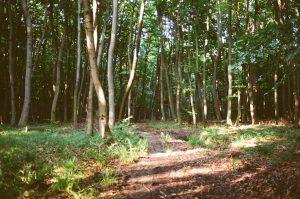 Ścieżki w lasach potrafią być bardzo urokliwe