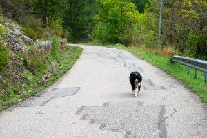 Ten pies biegł za mną kilka dobrych kilometrów