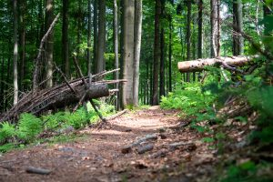 Urozmaicenie singletracka. Nie wszystkie drzewa były tak ładnie sprzątnięte