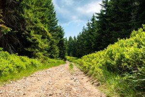Inne oblicze szlaku na Halę Miziową